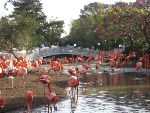 Flamingoes at Sea World