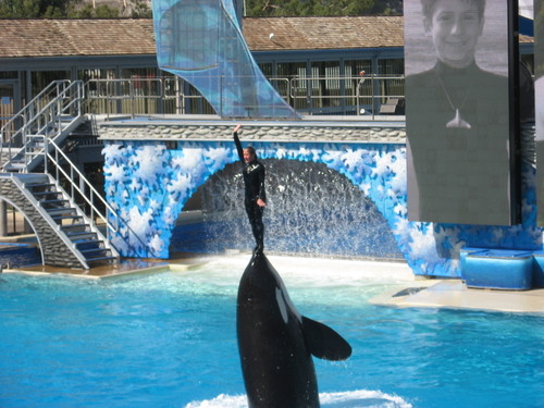 Sea World, girl trainer on killer whale's nose