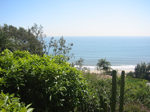 Pacific Ocean with cactus, from Pacific Palisades